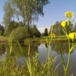 geltonas-vilkdalgis_2016-05-28 09.11.00