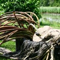 Vandens-leliju-sodinimas_IMG_7503