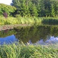 Vandens-leliju-tvenkiniai-2017-07-07-19.54.06