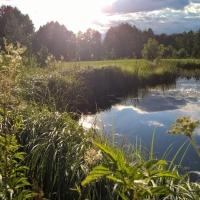 Vandens-leliju-tvenkiniai-2017-07-07-19.57.38