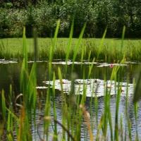 Vandens-leliju-tvenkiniai-IMG_4631