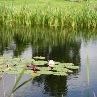Vandens-leliju-tvenkiniai-IMG_4634