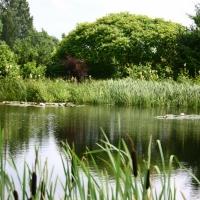 Vandens-leliju-tvenkiniai-IMG_4635