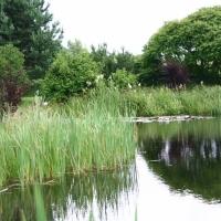 Vandens-leliju-tvenkiniai-IMG_4637