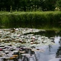 Vandens-leliju-tvenkiniai-IMG_4644