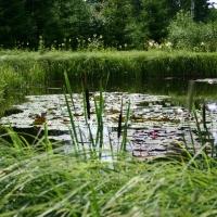 Vandens-leliju-tvenkiniai-IMG_4646