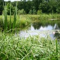 Vandens-leliju-tvenkiniai-IMG_4651