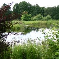 Vandens-leliju-tvenkiniai-IMG_4652