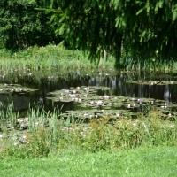 Vandens-leliju-tvenkiniai-IMG_4655